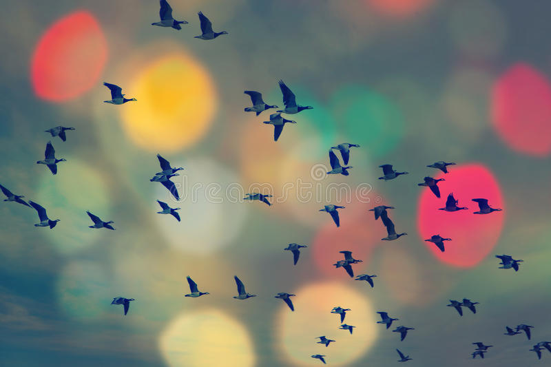Pássaros que voam e céu abstrato, fundo feliz do sumário do fundo da mola, conceito dos pássaros da liberdade, símbolo da liberda imagens de stock