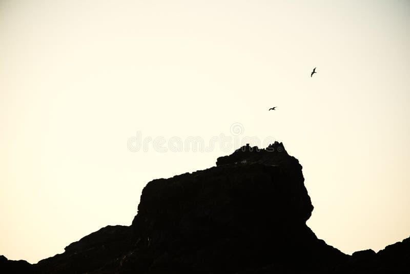 Pássaros que voam em torno da rocha fotografia de stock royalty free