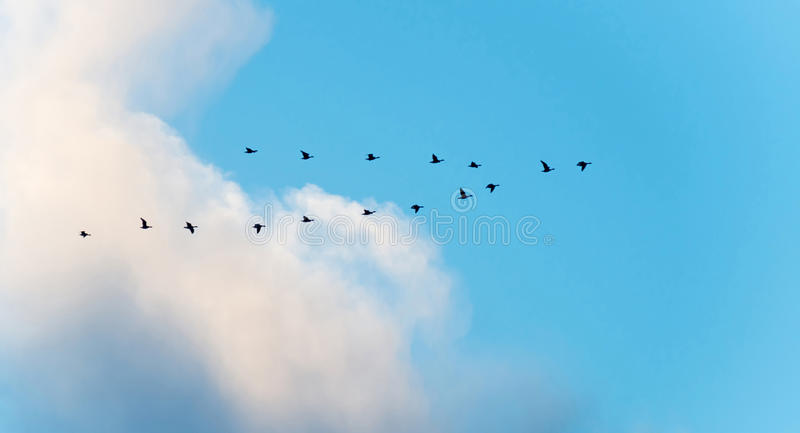 Pássaros que voam em um céu nebuloso azul fotografia de stock royalty free