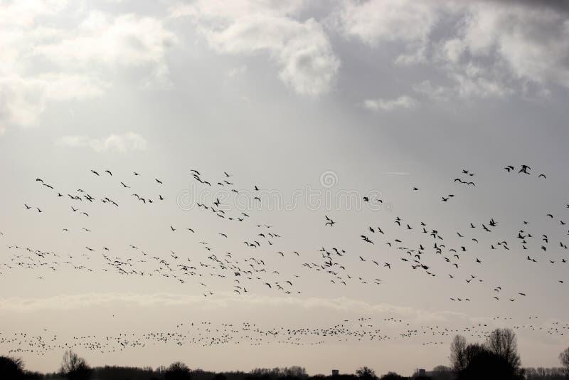 Pássaros que voam em um círculo fotos de stock royalty free