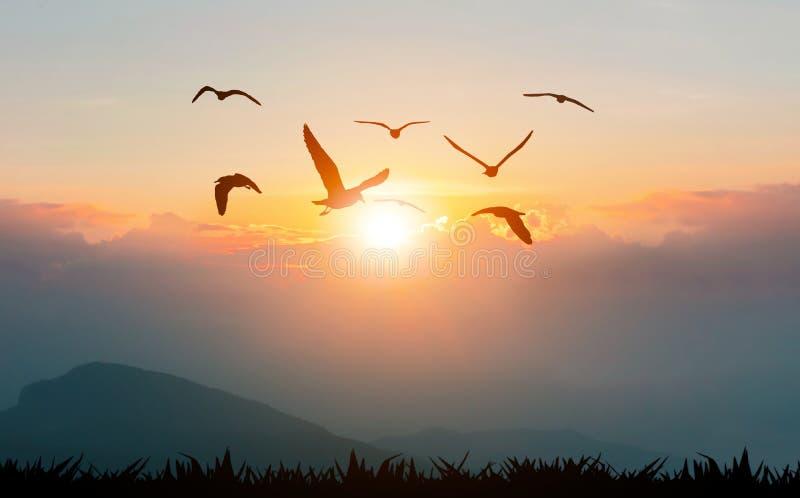P?ssaros que voam a liberdade nas montanhas e na luz solar imagem de stock