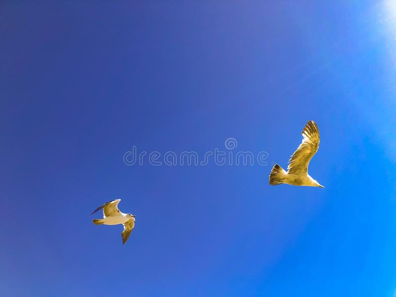 Pássaros que voam no céu sob raios de Sun fotografia de stock