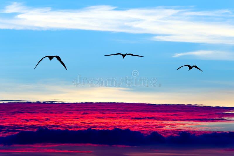 Pássaros que voam silhuetas fotos de stock