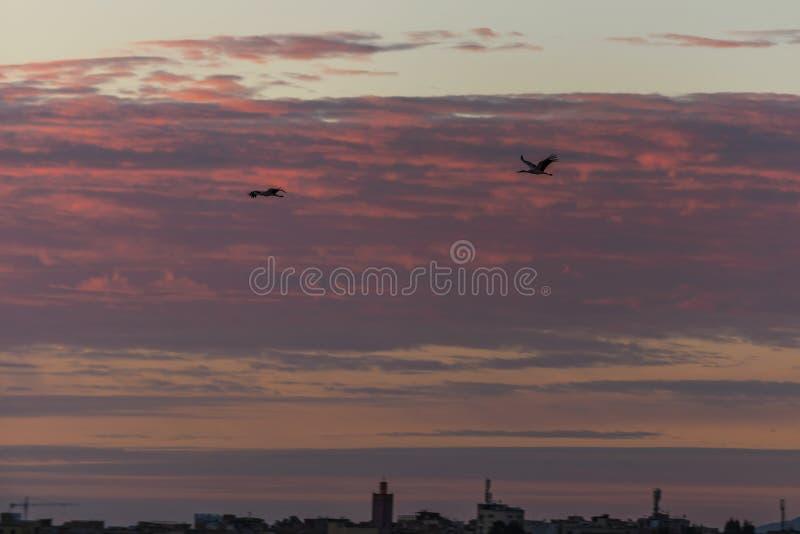 Pássaros que voam sobre a cidade velha em Meknes, Marrocos fotos de stock