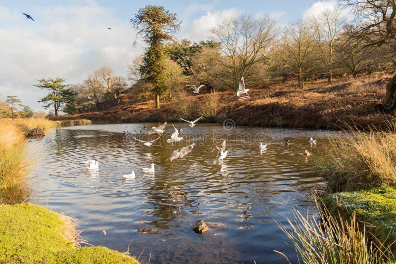 Pássaros que voam sobre um lago foto de stock