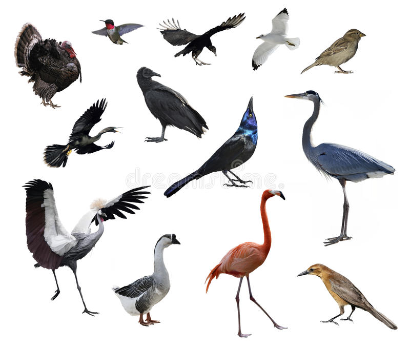 Pássaros selvagens imagem de stock