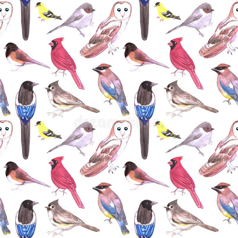 Pássaros sem emenda do fundo da aquarela selvagem dos pássaros de América ilustração stock