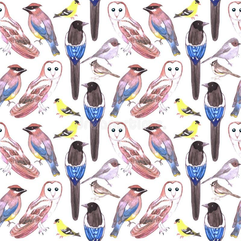 Pássaros sem emenda do fundo da aquarela selvagem dos pássaros dos EUA ilustração royalty free