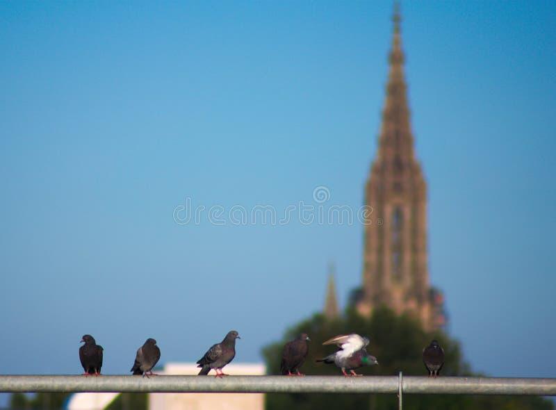 Pássaros, torre foto de stock