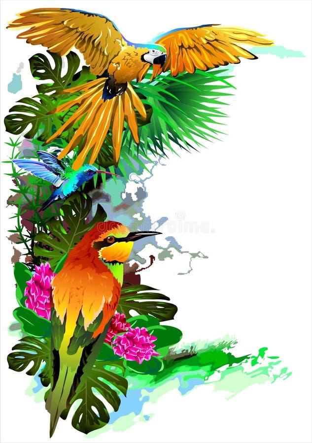 Pássaros tropicais Vetor ilustração stock