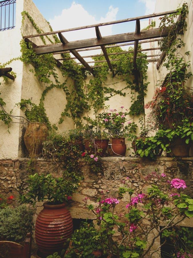 Pátio com as plantas em uns potenciômetros e em umas flores contra as paredes amarelas em Rethymno imagem de stock