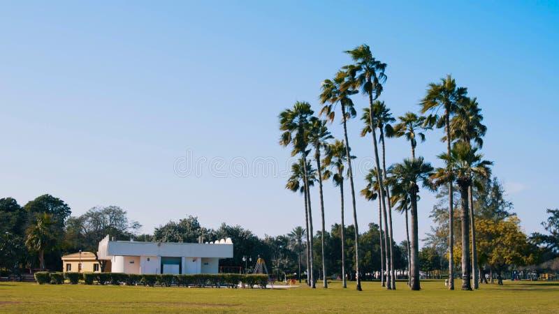Pátio com palmeiras fotos de stock royalty free