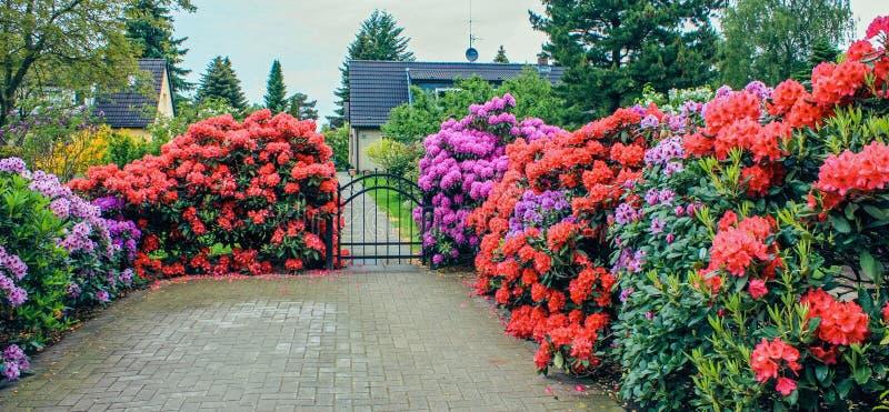Pátio de uma casa privada com um jardim dianteiro florescido em uma área residencial com árvores e o céu azul imagens de stock