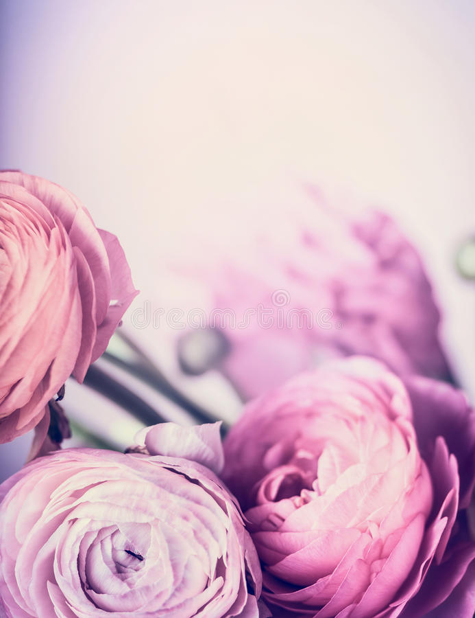 Pâle - les fleurs roses sur le fond en pastel, se ferment  Frontière et carte de voeux florales images libres de droits