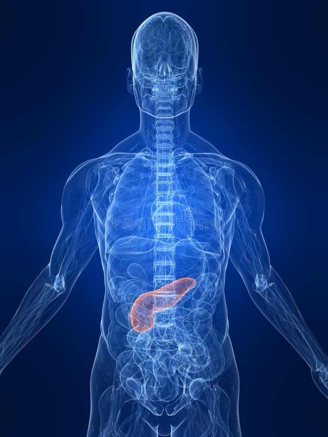 Pâncreas destacado ilustração do vetor
