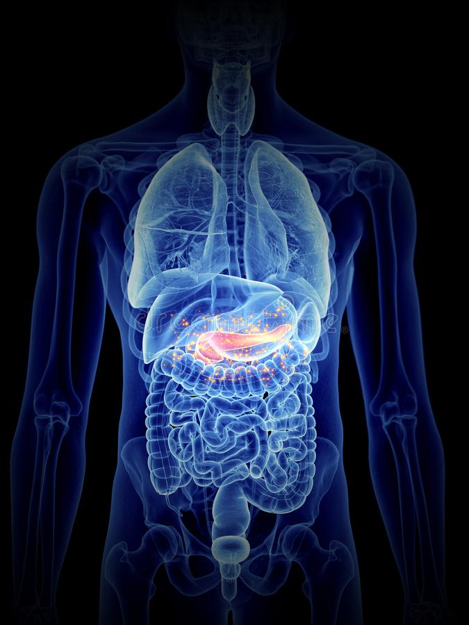 Pâncreas produzindo hormonas ilustração royalty free
