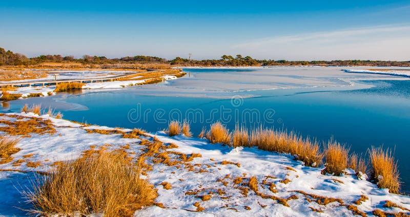 Pântano coberto de neve no litoral nacional da ilha de Assateague, Maryl fotos de stock royalty free