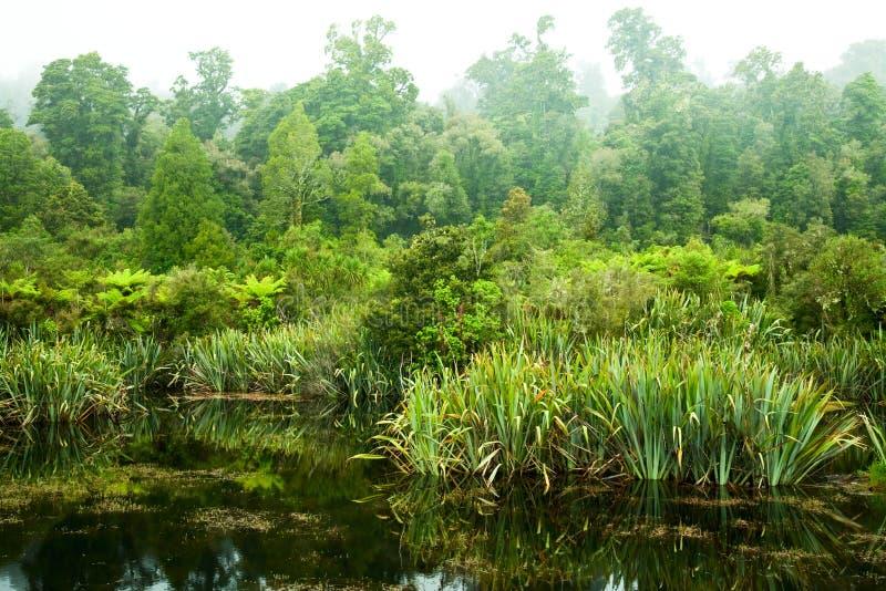 Pântano da floresta húmida imagens de stock royalty free