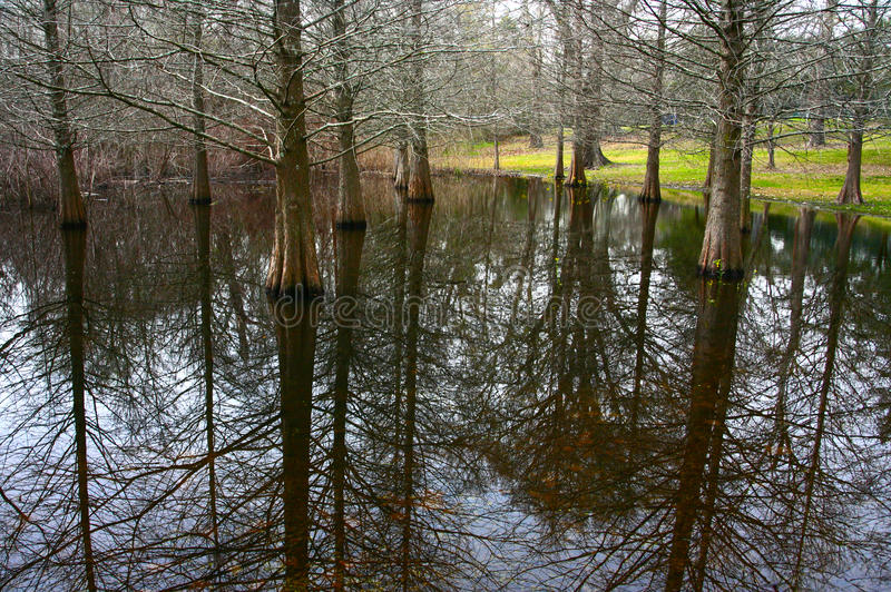 Pântano de Cypress fotos de stock