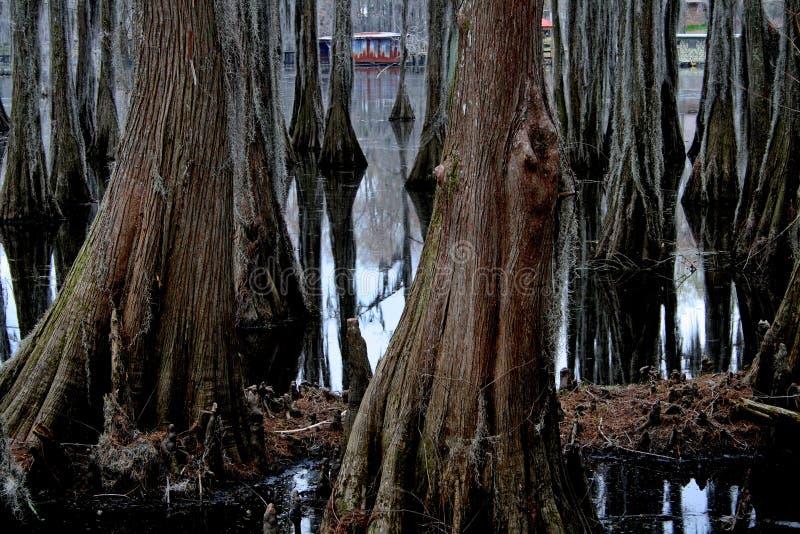 Pântano de Cypress imagem de stock royalty free