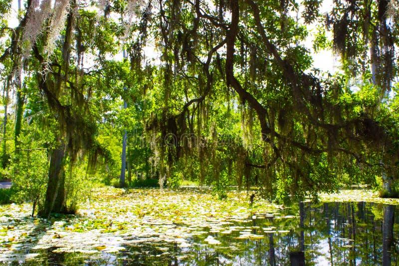 Pântano de Cypress fotos de stock royalty free