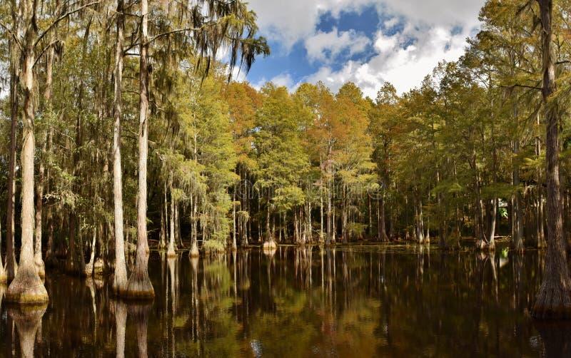 Pântano de Cypress em Florida fotos de stock