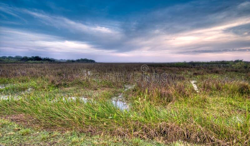 Pântano de Evergaldes foto de stock