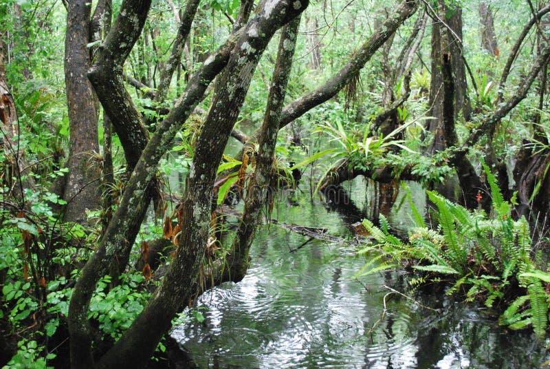 Pântano de Florida imagem de stock royalty free