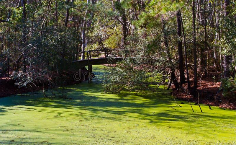 Pântano de Mill State Park do comerciante imagem de stock