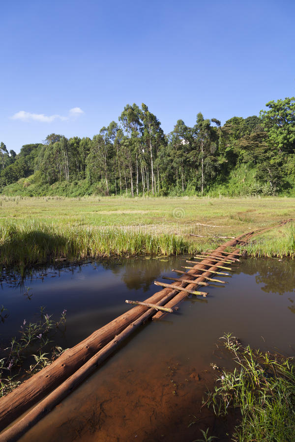 Pântano de Ondiri no kikuyu, Kenya imagem de stock royalty free