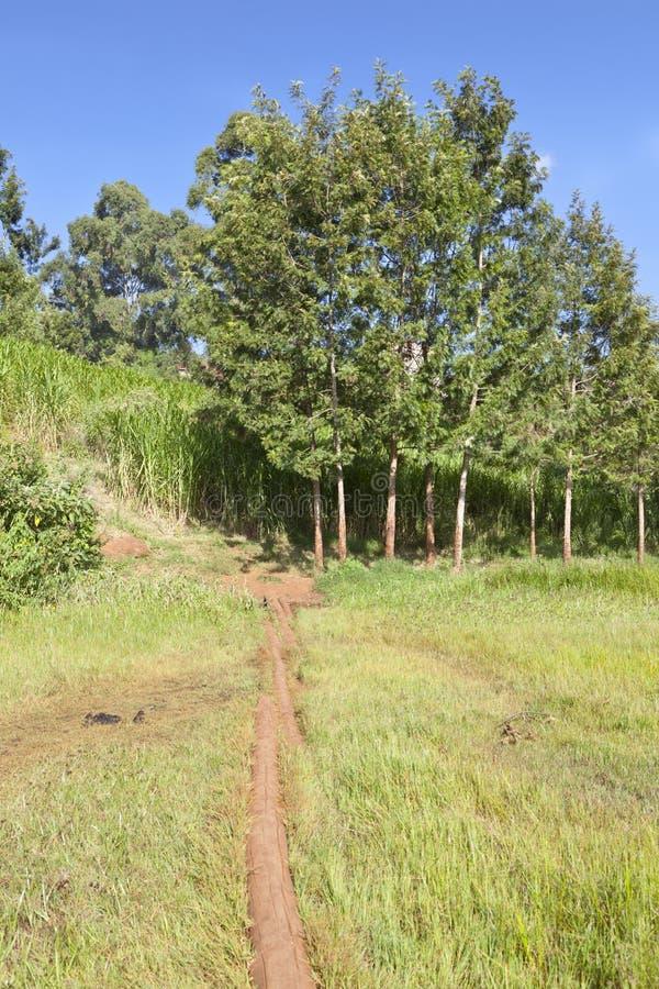 Pântano de Ondiri no kikuyu, Kenya imagem de stock