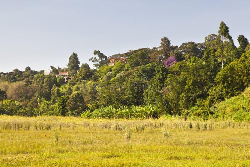 Pântano de Ondiri no kikuyu, Kenya foto de stock