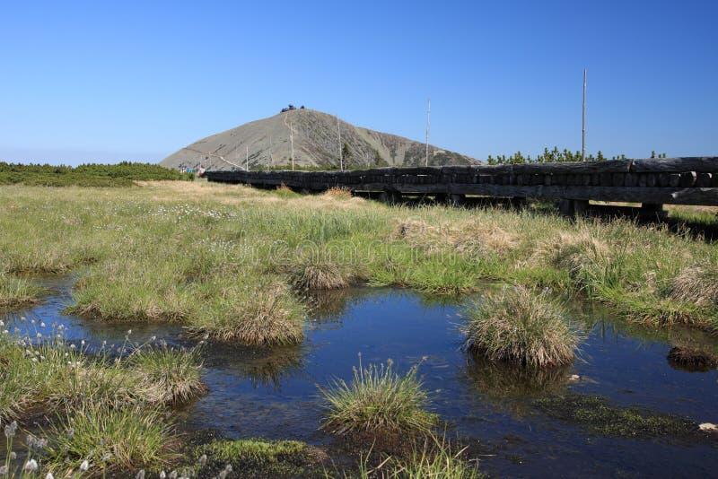 Pântano de turfa em montanhas gigantes imagem de stock