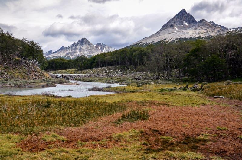 Pântano de turfa no parque perto de Ushuaia, Paragonia de Tierra del Fuego, Argentina imagem de stock