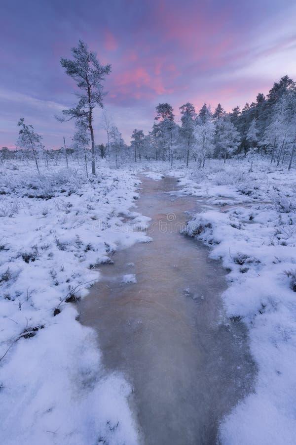 Pântano do inverno fotografia de stock