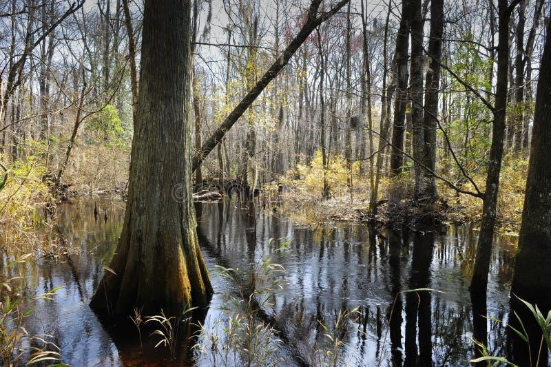 Pântano em South Carolina fotos de stock royalty free