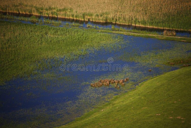 Pântano na decoração do verão imagem de stock royalty free
