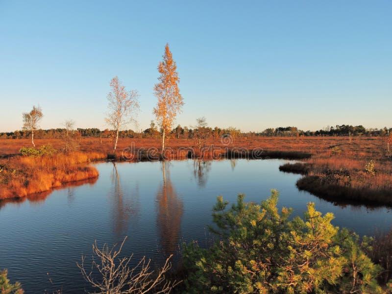 Pântano no outono, Lituânia de Aukstumalos foto de stock royalty free