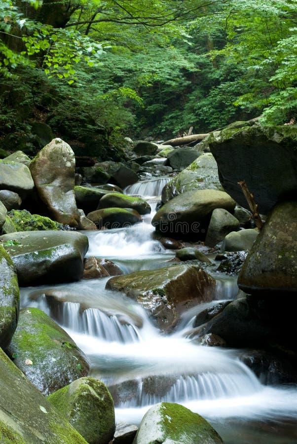 Pântano no rio acima imagens de stock royalty free