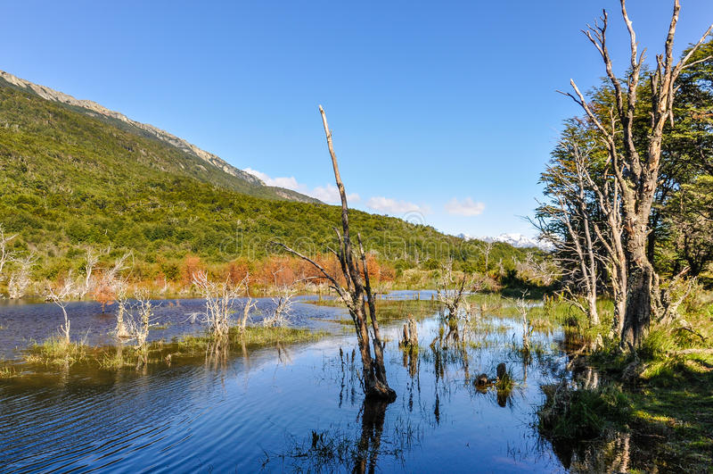 Pântano, Tierra del Fuego National Park, Ushuaia, Argentina fotografia de stock