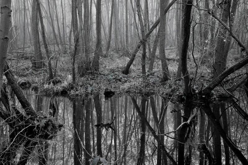 Download Pântanos foto de stock. Imagem de árvores, somber, árvore - 57926