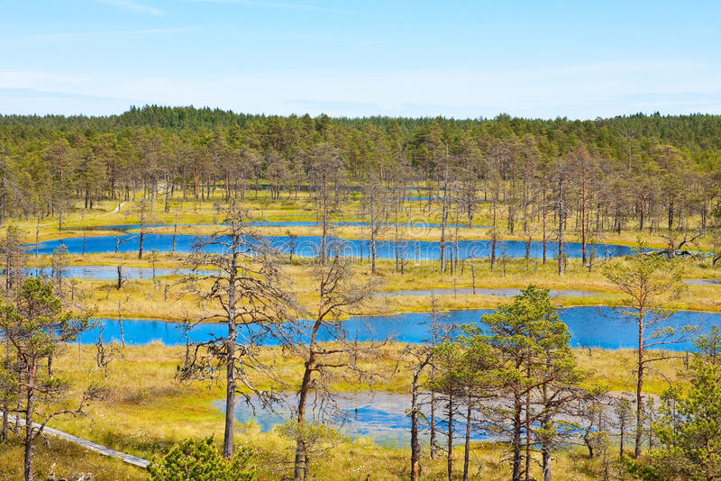 Pântanos em Estônia 2 fotos de stock