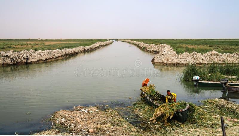 Pântanos mesopotâmicos, habitat de Marsh Arabs aka Madans iraq imagens de stock royalty free