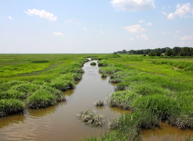 Pântanos na reserva natural imagem de stock royalty free