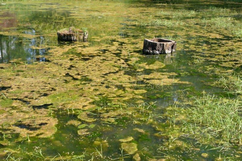 Pântanos verdes imagens de stock royalty free