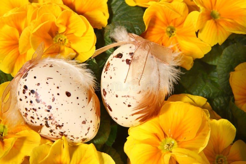 Pâques a coloré des oeufs et des fleurs jaunes image stock