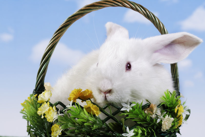 Pâques-lapin photographie stock
