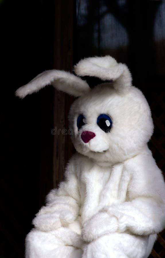 Pâques - lapin de Pâques image libre de droits
