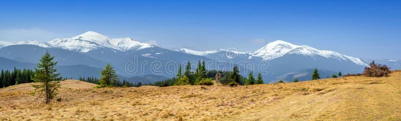 Pâturage alpin de panorama large dans les montagnes carpathiennes contre le contexte d'une arête couverte de neige de montagne et photos libres de droits