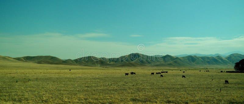 Pâturage de bétail photos libres de droits